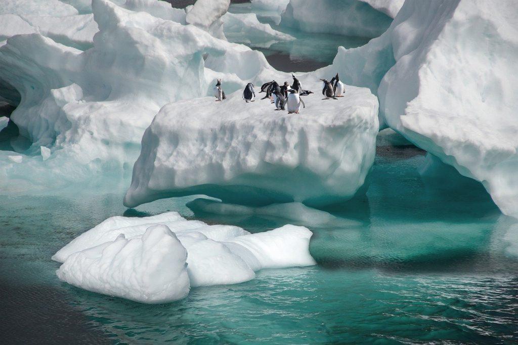 penguins, iceberg, sea_picfixs