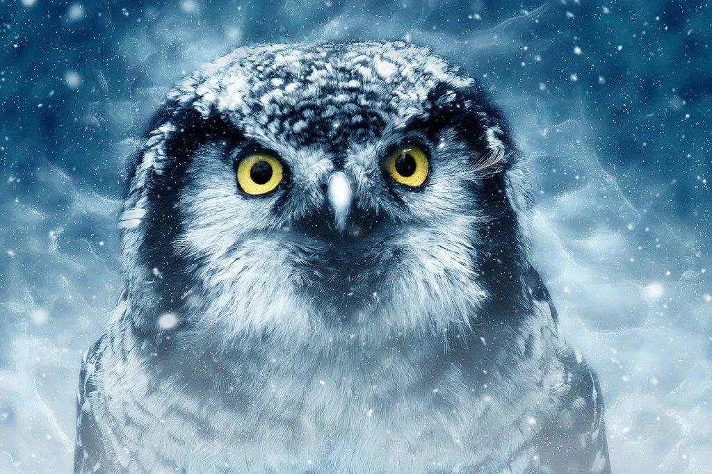 bird-owl-wildlife